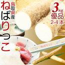 鳥取特産ねばりっこ新物山芋長芋優品(ご自宅用)約3kg2-4本入鳥取県ブランド送料無料
