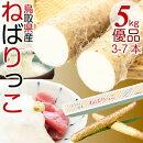 鳥取特産ねばりっこ新物山芋長芋優品(ご自宅用)約5kg3-7本入鳥取県ブランド送料無料