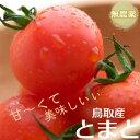 ★鳥取県産トマトほんのり甘くて無農薬★鳥取産 トマト 甘くて美味しい!大自然の無農薬安心 とまと 1kg詰め(30〜35個) 送料無料