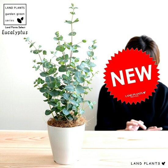 【お試し】 ユーカリ(グニー) 4号 白色 プラスチック鉢 鉢植え プラ鉢 ホワイト 白 ユーカリの木 ユーカリプタス フトモモ グニ コアラ インテリアバーク 観葉植物