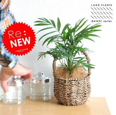 テーブルヤシ 可愛いバスケットセット ヤシ♪ 敬老の日 ポイント消化 観葉植物