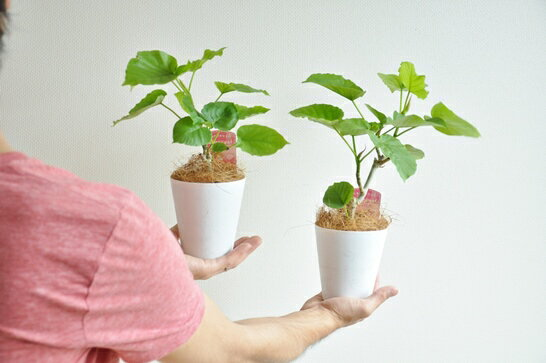 一番人気の植物です。