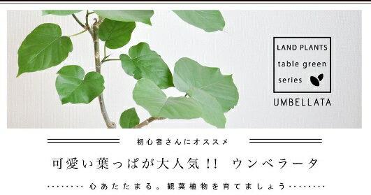 ハート型の葉っぱがCute