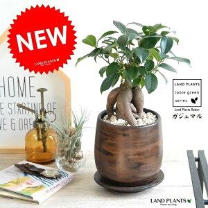 ガジュマル幹太タイプウッド風ペイント陶器Sサイズ陶器鉢・鉢植え・鉢・丸鉢・ブラウン