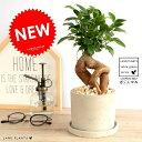 ガジュマル (幹太タイプ) セメント シリンダー型 陶器鉢 鉢植え 鉢 なえ 苗木 苗 観葉植物灰 グレー ネズミ 丸 ラウンド 送料無料