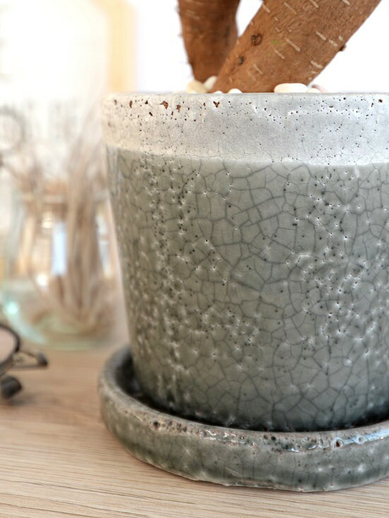ガジュマル(幹太タイプ)やさしい色合い陶器鉢(灰色)鉢植えクレーパ陶器陶器鉢鉢苗苗木灰グレーチャコールラウンド観葉植物送料無料