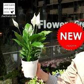 【元気な苗が再入荷!】【お試しサイズ】 スパティフィラム 白の美しい花を咲かせる観葉植物 table green series Spathiphyllum【母の日ギフト】