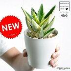 【お試し】 アロエ(不夜城:フャジョウ) 4号 白色 プラスチック鉢 (斑入り) 多肉植物・多肉質・多肉・ カクタス・苗・苗木・ポイント消化・観葉植物 Aloe・アロエベラ