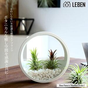 [名入れ ギフト プレゼント 植物] Glass Flame in Tillandsia [ Sサイズ ] 壁掛け ガラス鉢 寄せ植え エアープランツ エアプランツ 観葉植物 母の日 母 お誕生日 プレゼント高級 おしゃれ お祝い 還暦祝い 古希 喜寿 米寿 長寿