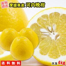 河内晩柑みかん4kg送料無料大玉ご家庭用箱買い柑橘フルーツ果物産地直送愛媛県産