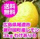 送料無料 わけありレモン 3kg 広島県産 防腐剤・防かび剤不使用 ノーワックス 皮ごと食…