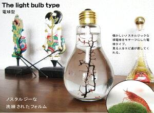 癒しエビ ピクシーシュリンプ 電球型【熱帯魚 エビ】☆シュリンプ セット・飼育セット・アクアリ…
