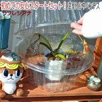 【10%off】食虫植物観葉植物面白植物ネペンテス(2種から選択)とミニ温室セット【自由研究】