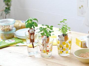 【オシャレ】【雑貨】【観葉植物】【食虫植物】【植物】【ガーデニング】【ボタニカル】【フラワー】【アレンジ】フォーベトン・スクエアポットセット・MWH