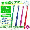 Dentex_20