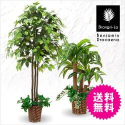 【送料無料】Shangri-La/シャングリラインテリアグリーンベンジャミン幸福の木(ドラセナ)組み合わせ選べる2本セット人工観葉植物光触媒フェイクグリーン2本セット