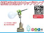 物育成用クリップランプ(屋内・屋外用)KY-08W-SC