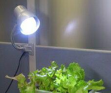 植物に光を!  超高輝度効果抜群!   期間限定 セット販売 超お買い得! サンプランター ...