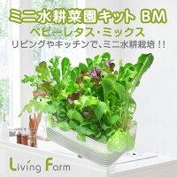 ミニ水耕菜園キットBMベビーレタス・ミックス