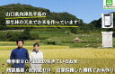 生きているお米の黒米 無農薬の古代米 残留農薬 放射能ゼロ 真空包装 便利なチャック付き 250g 2