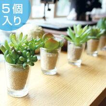 人工観葉植物 消臭アーティフィシャルグリーン リトルサキュレントファミリー 5個入り