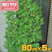緑のカーテン 吊り下げ 幅80cm×高さ5m ( グリーンカーテン 日よけ すだれ 日除け )
