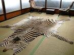 ゼブラ敷物 約280×225cm シマウマ ゼブラ柄 毛皮 壁掛 オブジェ 頭 剥製 革 ラグ 南アフリカ地域 アニマル 皮 本革 敷物 カーペット