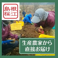 島根桜江生産農家から直接お届け