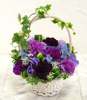 早期予約特典付き!花言葉は「永遠の幸福」【送料無料!幸せを花かごにつめて ムーンダスト ...