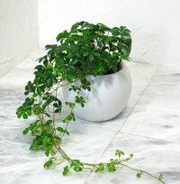 観葉植物 小①
