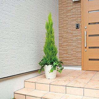 ★送料無料★ゴールドクレストH140cm人工人工観葉植物光触媒鉢植えアートグリーンインテリアグリーン3A5702-360