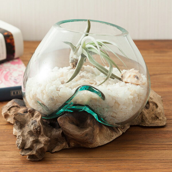 テラリウムアクアリウムオブジェナチュラルウッド&バリガラス(金魚鉢水槽花器花瓶熱帯魚金魚メダカめだかエアプランツ玄関リビング寝室