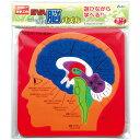EVA脳パズル パズル ゲーム 玩具 おもちゃ 脳 人の体のしくみ 学習 理科 知育玩具 室内
