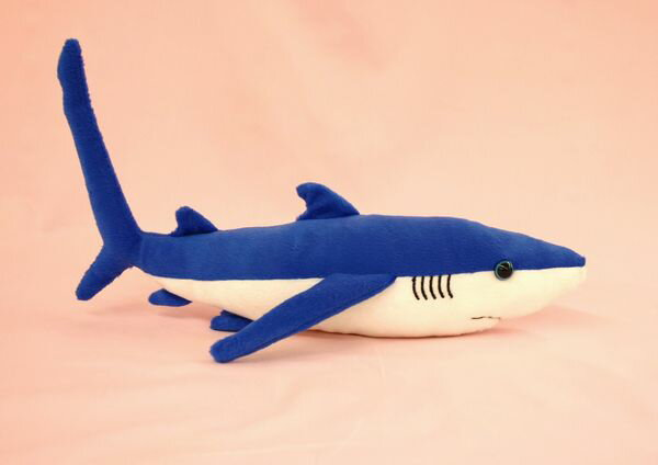 ヨシキリザメ2