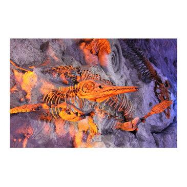 MU3アクセント壁紙 化石のオブジェ-tp3014 ウォールステッカー オブジェ ダイナソー 恐竜 写真 絵画 シール