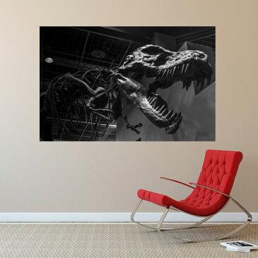 MU3アクセント壁紙 恐竜の化石-tp3015 ウォールステッカー ティラノサウルス ダイナソー 恐竜 写真 絵画 シール