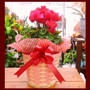 店長おすすめ!お誕生日、記念日!各種御祝!お歳暮に季節の花鉢で花GIFT!即日配送14時まで受...