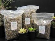 サボテン 多肉植物 リットル