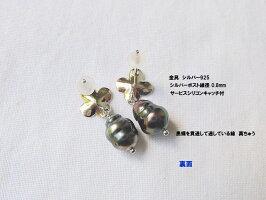 黒蝶真珠ケシ