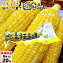 コーン とうもろこし トウモロコシ 送料無料 北海道 取り寄せ 美瑛産とうもろこしのフリーズドライ ソフトコーン 3袋 (1袋あたり25g) 常温 ネコポス