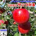 サンつがる りんご 訳あり 5kg 青森産 葉とらずりんご つがる サンツガル 津軽 リンゴ 林檎 送料無料