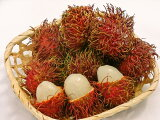 冷凍 ランプータン 冷凍 スムージー 美容 南国フルーツ