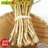 沖縄産島らっきょう(生)500g│沖縄野菜│