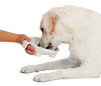 ペティオ老犬介護用持ち手付食器大