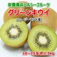 【5月中旬頃より順次発送】ニュージーランド産 キウイ10〜15玉 約1.5kg