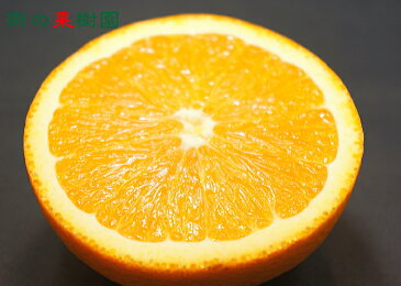 【送料無料】アメリカ・オーストラリア産 ネーブルオレンジ15玉 約3kg