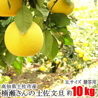 【贈答用】楠瀬さんの土佐文旦3L/10kg