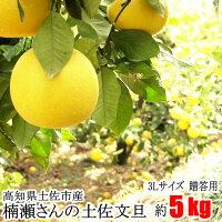 【贈答用】楠瀬さんの土佐文旦3L/5kg