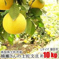 【贈答用】楠瀬さんの土佐文旦L/10kg