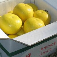 【贈答用】楠瀬さんの土佐文旦2L/10kg
